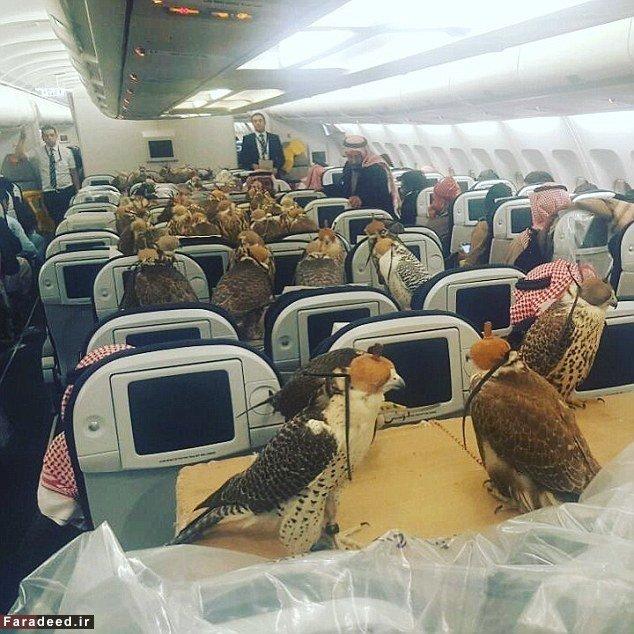 اقدام عجیب شاهزاده سعودی در هواپیما  یک شاهزاده سعودی ۸۰ پرنده شکاری را سوار هواپیما ...